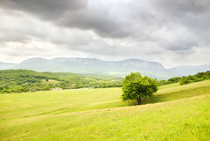Spring meadow landscape. Stock Image