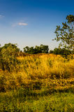 Spring Meadow Landscape  Stock Photo