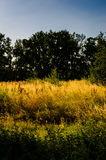 Spring Meadow Landscape  Royalty Free Stock Images
