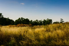 Spring Meadow Landscape Royalty Free Stock Photo