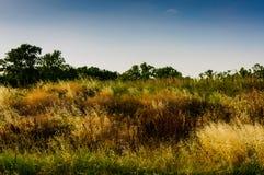 Spring Meadow Landscape Stock Photos