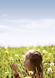 Spring Meadow #37 Royalty Free Stock Photo