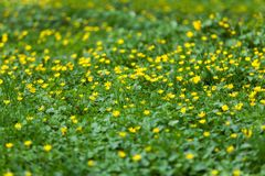 The spring meadow royalty free stock images