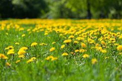 The spring meadow Stock Image
