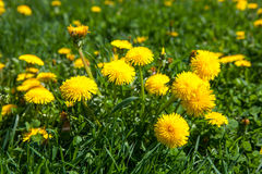 The spring meadow royalty free stock photos