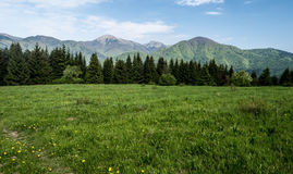 Spring meadow with Mala Fatra mountains on the background in Slovakia Royalty Free Stock Photography