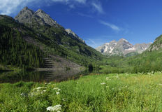 Spring meadow near Maroon Bells in Colorado Royalty Free Stock Image