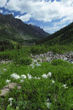 Spring meadow near Maroon Bells in Colorado Stock Images