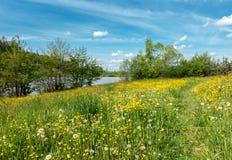 Spring meadow path around pond under blue sky Royalty Free Stock Image
