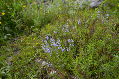 Spring meadow plants. Flowering of the spring meadow plants in Montenegro Stock Photography