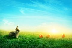 Spring meadow with a rabbit Stock Photos