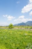 Spring meadow and river Royalty Free Stock Photo