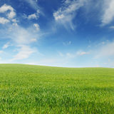 Spring meadow and sky Royalty Free Stock Images
