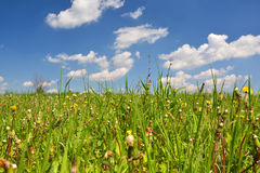 Spring meadow and sky Royalty Free Stock Photography