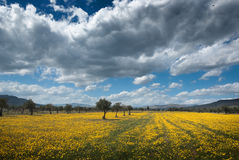 Spring Meadow And Stormy Sky Royalty Free Stock Photos