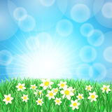 Spring meadow in the sun Royalty Free Stock Photos