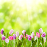 Spring meadow. With sunny flowers, nature background Stock Image