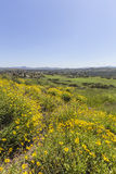 Spring Meadow in Thousand Oaks California. Royalty Free Stock Photos