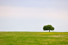 Spring meadow with tree Royalty Free Stock Images