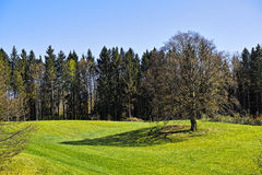 Spring meadow and trees Stock Image
