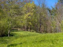 Spring meadow in woods, Europe Stock Photos