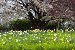 Spring meadows Stock Photos