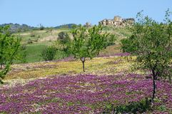 Spring meadows, Andalusia. Stock Image
