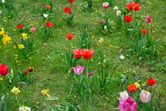 Spring meadows with colorful flowers Royalty Free Stock Photos