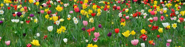 Spring meadows with colorful flowers Stock Photography