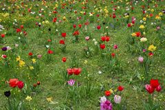 Spring meadows with colorful flowers Stock Photo