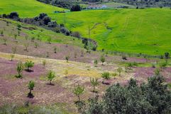 Spring meadows near Ardales, Spain. Field with lilac spring flowers and trees, Near Ardales, Malaga Province, Andalusia, Spain, Western Europe Stock Image