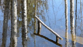 Spring melt-water and tree reflections in pond stock video