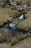 Spring of meltwater in the Madriu-Perafita-Claror valley Royalty Free Stock Images