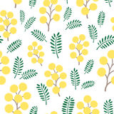 Spring mimosa flowers, seamless vector pattern. Spring mimosa flowers and leaves, seamless vector pattern Royalty Free Stock Images