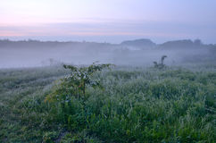 Spring misty landscape in the countryside Stock Photos