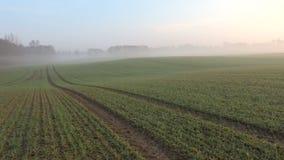Spring misty morning farmland landscape stock video