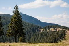 Spring in the montains Royalty Free Stock Images