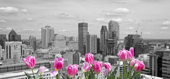 Spring in Montreal Stock Photos