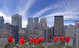 Spring in Montreal. Montreal city with red tulips on front Royalty Free Stock Photos