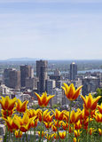 Spring in Montreal Royalty Free Stock Images