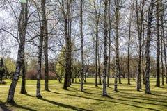 Spring mood. Royalty Free Stock Image