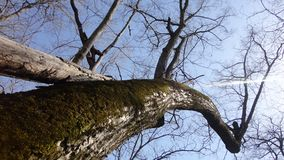 The trunk of the tree against the sky stock photography