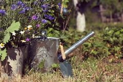 Spring mood. Wild flowers in bucket against the blurred outlines of a watering can with a shovel in the garden royalty free stock images