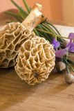 Spring Morels. On a cutting board with chive blossoms and edible violets Royalty Free Stock Photography