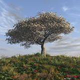 Spring morning. 3d render of a cherry tree in a spring morning Royalty Free Stock Image