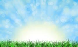 Spring morning. Green grass on sunlight and blue sky background, illustration royalty free illustration