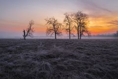 Spring morning with beautiful trees. Stock Photography