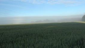 Spring morning fog mist and sunrise in farmland, wheat field stock video footage