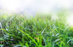 Spring morning grass with dew and sunlight Stock Images