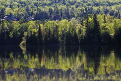 Spring Morning in Laurentides Stock Images